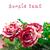 Rood · rose · geïsoleerd · witte · blad - stockfoto © discovod