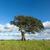 wiosną · krajobraz · samotny · drzewo · Hill · przeciwmgielne - zdjęcia stock © discovod