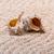 mar · conchas · coral · areia · praia · textura - foto stock © Discovod
