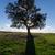 mooie · landschap · eenzaam · boom · zon · blauwe · hemel - stockfoto © discovod