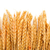 izolált · búza · fülek · arany · gabona · fehér - stock fotó © discovod