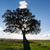 seuls · arbre · champ · d'herbe · ciel · paysage · domaine - photo stock © discovod