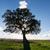 красивой · пейзаж · одиноко · дерево · солнце · Blue · Sky - Сток-фото © Discovod