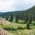поезд · соснового · лес · пейзаж - Сток-фото © disorderly