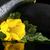 花 · トレイ · 食品 · 自然 · 健康 · 背景 - ストックフォト © dla4