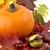 lado · tiro · calabaza · hojas · de · otoño · acción · de · gracias · día - foto stock © dla4