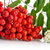 cropped studio shot of red ash berry on white stock photo © dla4