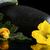 flores · comida · folha · fundo · verão - foto stock © dla4