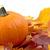 decoración · calabaza · hojas · de · otoño · acción · de · gracias · día · blanco - foto stock © dla4