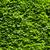 parede · grande · natureza · verde · folha - foto stock © dmitroza