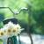 古い · 自転車 · 花束 · 白 · クローズアップ - ストックフォト © dmitroza