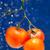 fresco · tomates · vermelho · gotas · água · natureza - foto stock © dmitroza