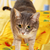 cat at the bedroom stock photo © dmitroza