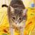 chat · chambre · rayé · domestique · cute · cheveux - photo stock © dmitroza