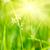 sereen · zonnige · veld · weide · voorjaar · gelukkig - stockfoto © dmitry_rukhlenko