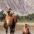 camel in nubra vally ladakh stock photo © dmitry_rukhlenko