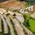 arrozal · Vietnã · arroz · gato · aldeia · natureza - foto stock © dmitry_rukhlenko