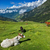 vacas · alpino · leite · alpes · montanha - foto stock © dmitry_rukhlenko