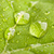 ビッグ · 緑色の葉 · 自然 · 夏 · 工場 · 熱帯 - ストックフォト © dmitry_rukhlenko