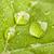 feuille · verte · trois · grand · macro · peu · profond - photo stock © dmitry_rukhlenko