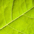 feuille · verte · vert · macro - photo stock © dmitry_rukhlenko