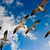 seagulls flying stock photo © dmitry_rukhlenko