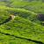 tea · égbolt · levél · zöld · hegyek · mezőgazdaság - stock fotó © dmitry_rukhlenko