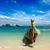 łodzi · tropikalnej · plaży · pionowy · krajobraz · morza · dłoni - zdjęcia stock © dmitry_rukhlenko