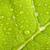 feuille · verte · macro · eau · vert · usine - photo stock © dmitry_rukhlenko