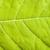 feuille · verte · vert · usine · macro - photo stock © dmitry_rukhlenko