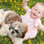 gelukkig · hond · veld · bloemen · lopen · weide - stockfoto © dnf-style