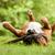ボクサー · スティック · 幸せ · 犬 · 外 · 森林 - ストックフォト © DNF-Style