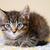 adorable · gatito · azul · amarillo · edredón · cute - foto stock © dnsphotography