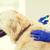vétérinaire · vaccin · chien · clinique - photo stock © dolgachov