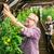 старший · фермер · сквош · фермы · теплица - Сток-фото © dolgachov