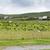 birka · mező · Írország · természet · mezőgazdaság · nyár - stock fotó © dolgachov