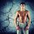 jonge · mannelijke · bodybuilder · gespierd · torso - stockfoto © dolgachov