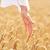 стороны · пшеницы · продовольствие · природы · уха · человек - Сток-фото © dolgachov