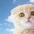 котенка · кошки · домашние · животные · кошек - Сток-фото © dolgachov