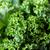 close up of green salad lettuce stock photo © dolgachov