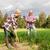 schop · wortelen · boerderij - stockfoto © dolgachov