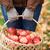 mujer · manzanas · alimentos · naturaleza · belleza - foto stock © dolgachov