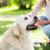 close up of woman with labrador dog on walk stock photo © dolgachov