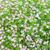 красивой · Полевые · цветы · луговой · весны · любви · природы - Сток-фото © dolgachov