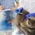veterinario · portapapeles · gato · clínica · medicina - foto stock © dolgachov