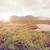 kilátás · sziget · tó · folyó · Írország · természet - stock fotó © dolgachov