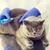 veterinario · vacuna · gato · clínica - foto stock © dolgachov