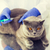 ветеринар · вакцина · кошки · клинике - Сток-фото © dolgachov