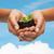 vrouw · handen · plant · bodem · vruchtbaarheid - stockfoto © dolgachov