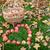outono · ação · de · graças · dia · fruto · comida · fundo - foto stock © dolgachov